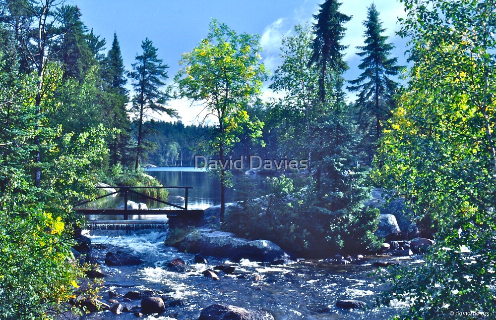 Rushing River Provincial Park II by David Davies