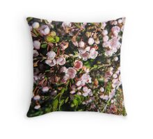 Pink Thryptomine, Spring flowers. Throw Pillow