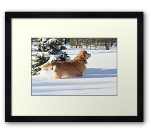 What On Earth Does He See?! FEATURED PHOTO Framed Print