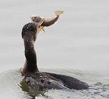 Cormorant With His Catch by David Friederich