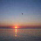 Flight by Nella Khanis