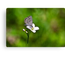 Spring Butterfly Canvas Print