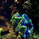 Coral by takemeawaycn