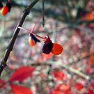 Autumn berry by takemeawaycn