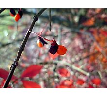 Autumn berry Photographic Print