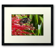 The Fly # 2 Framed Print