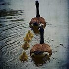 Geese in a Row by Mattie Bryant