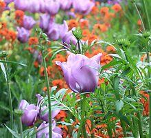 May beauties by Malgorzata Larys