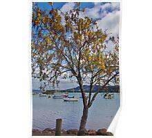 Kōwhai tree at Whangaroa Poster