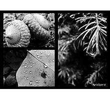 Collage - Nature up Close  Photographic Print