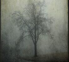 Foggy Morning II by Mattie Bryant