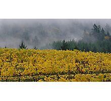Fall Vineyard Photographic Print
