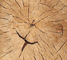 Top view closeup on an old tree stump by vladromensky
