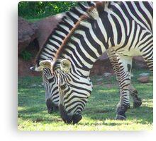 Zebra's  Canvas Print