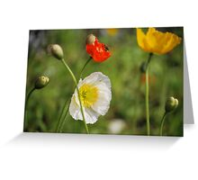 Poppies and the Bee Greeting Card