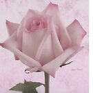 Rose Calender For The Rose Lover by Sandra Foster