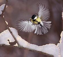 in.flight by maratsuikka