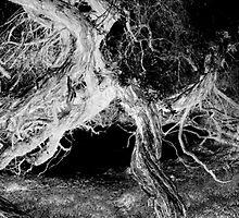 Negativitree. by David Mellor