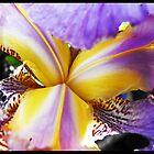 A heart of an Iris by bebas