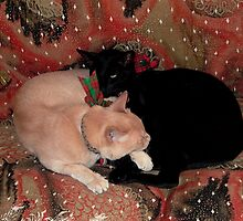 Christmas Cats by Christina Backus