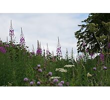 Purple Spires Photographic Print