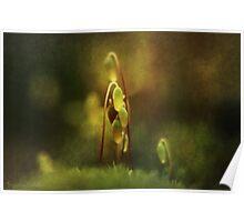 November's Moss Poster