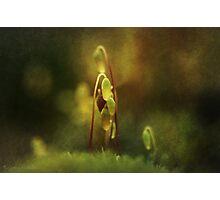 November's Moss Photographic Print