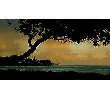Tree Cover... Kauai Sensual Series Photographic Print