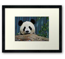 Funi the Giant Panda Framed Print