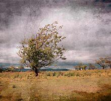 Lonely by Malgorzata Larys
