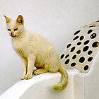 White Cat, Black Spots by Christina Backus