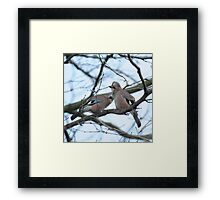 Too Cold To Fly Away Framed Print