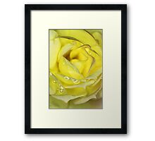 Rose in Yellow Framed Print