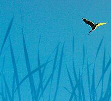 Ibis at dawn by nadine henley