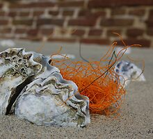 OYSTER & NET by RED-RABBIT
