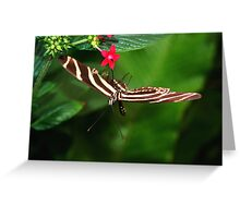 In Balance Zebra Longwing - Heliconius charithonia Greeting Card