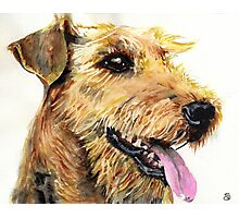 Airedale Terrier Photographic Print
