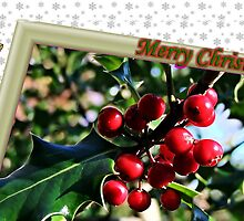 """"""" Holly Berries"""" by Malcolm Chant"""
