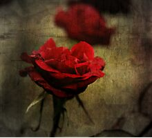Roses are Red #2 Photographic Print
