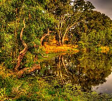 Reflecting Time - Wonga Wetlands, Albury , NSW Australia - The HDR Experience by Philip Johnson