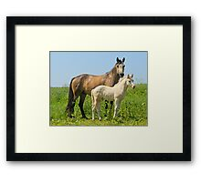 Connemara pony mare with foal Framed Print