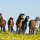 Paso Fino horses by Manfred Grebler