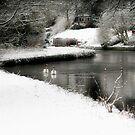 Walking in a Winter Wonderland by hjaynefoster