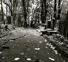 The New Jewish Cemetery in Kraków. Tribute to Chris Schwarz photographer and founder , Galicia Jewish Museum , Kraków. by © Andrzej Goszcz,M.D. Ph.D