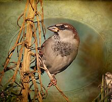 SPARROW DELIGHT by TJ Baccari Photography