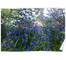Bluebells woodland walk - Sewerby Hall  Poster
