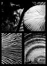 Collage - Black & White Shrooms by Marcia Rubin