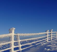Iced Fence & Moon by themajesticfool