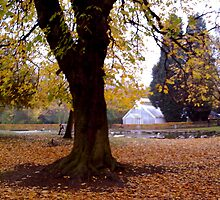 Pearson Park - Hull by Merice Ewart Marshall - LFA