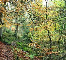 Snaiton Forest - Falling Foss North Yorkshire by Merice  Ewart-Marshall - LFA